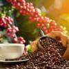 caffè in cialde espresso decaffeinato Caffè Monachello Dek